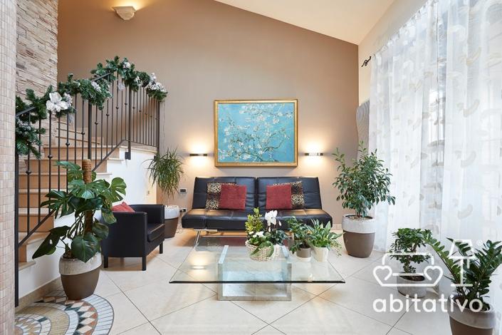 piante eleganti da appartamento